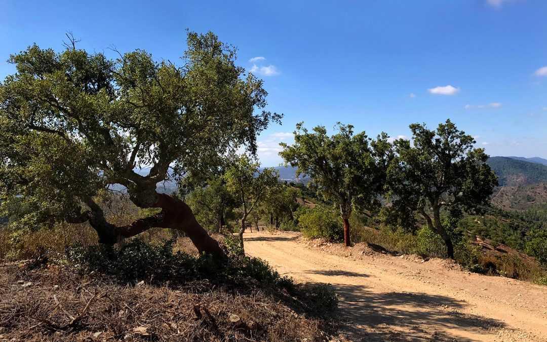 Testride Sierra Nevada