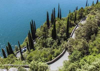 Zypressen am Gardasee
